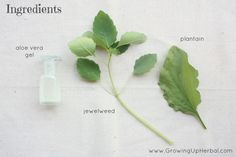 herbal poison ivy remedy ingredients