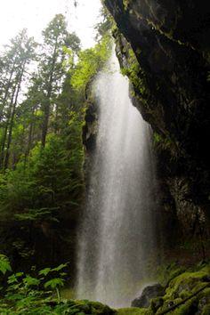 gif 1k paisagem Washington natureza da cachoeira da floresta noroeste pacífico Evergreen pnw covell riacho