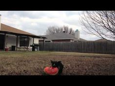 Dogs Catching Frisbee in Slow Motion! http://www.bterrier.com/dogs-catching-frisbee-in-slow-motion/