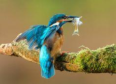 Amaze7: Stunning Nature Photography