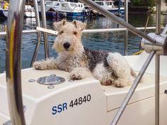 Ralph sailing in Falmouth, Cornwall