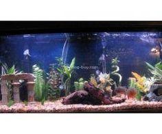 Baba Colour Fish Aquarium Aquarium Fish For Sale, Colour, Dogs, Color, Pet Dogs, Doggies, Colors