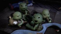 OMG!!! Baby Turtles!!!