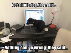 http://laugh.is-best.net/just-a-little-dog/
