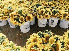 she's my sunflower girl -m