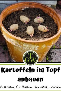 Growing potatoes in a pot is a space-saving way to cultivate these vegetables on the balcony, terrace or in the small garden. In this post you will find detailed instructions and numerous tips. Diy Projects For Beginners, Gardening For Beginners, Gardening Tips, Urban Gardening, Indoor Garden, Outdoor Gardens, Garden Plants, Best Chicken Coop, Chicken Feed