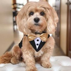 Dog Clothes - A Couple Of Steps Towards Finding Success Along With Your Dog Baby Dogs, Pet Dogs, Dog Wedding Attire, Wedding Tuxedos, Wedding Poses, Wedding Ideas, Dog Tuxedo, Dog Suit, Dog Clothes Patterns