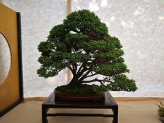 Bonsai, Plants, Bonsai Trees, Planters, Plant, Planting, String Garden