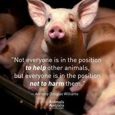 f8efc157ff83b84d5ccc990e5f3ed827--save-animals-vegan-quotes.jpg (736×736)