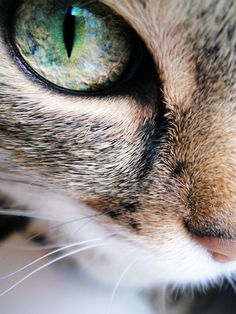 animal, cat, cats, close up, eye