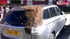 بـ #الفيديو: 20 ألف نحلة مُخلصة تطارد سيارة لإنقاذ الملكة المحبوسة داخلها! #منوعات #الوطن