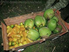 Fruit picked from neighbouring trees: starfruit, mandarina oranges and pipas. Guanacaste Province, Costa Rica.