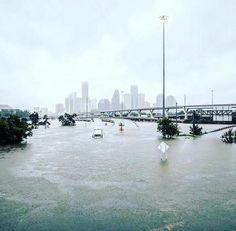 The NAR is supporting reasonable and badly needed reform of the National Flood Insurance Program or are they? They are sending mixed signals. Houston Flooding, Flood Information, Flood Map, Purchase Contract, Flood Damage, Water Images, Flood Insurance, Eye Of The Storm, Flood Zone