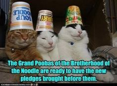 Grand Poobah of the Brotherhood of the Noodle