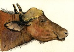 "African buffalo cape africa head study wildlife color animal drawing 8x5"" 21x15 cm art original Watercolor painting by Juan bosco"