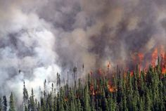 Scientists are still trying to figure out the complex relationship between wildfires and biodiversity.