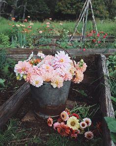 Real Plants, Growing Plants, Live Plants, Outdoor Plants, Outdoor Gardens, Succulents Garden, Planting Flowers, Indoor Garden, Home And Garden