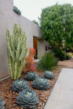 20 Marvelous Modern Front Yard Landscaping Ideas - Page 12 of 25 Modern Front Yard, Small Front Yard Landscaping, Cheap Landscaping Ideas, Landscaping Shrubs, Succulent Landscaping, Front Yard Design, Landscaping With Rocks, Succulents Garden, Landscaping Design