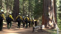 Rim Fire: Burned Areas See 'Unprecedented' Destruction