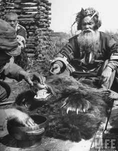 Washing mouth of slain bear is part of Ainu ritual of worshiping new Bear God, Shiraoi, 1946 by Alfred Eisenstaedt