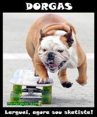 Parte três com cachorros skatistas, mais um bulldog skatista essa raça curte um role de board.
