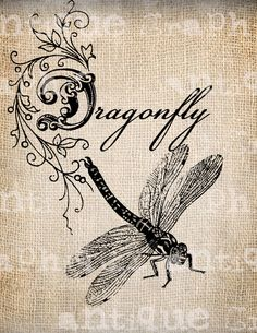 Antique Summer Insect Dragonfly Fancy Ornate llustration Digital Download for Papercrafts, Transfer, Pillows Burlap No 2841. $1.00, via Etsy.