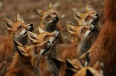 When I said I wanted the attention of a bunch of foxes... this was not what I was thinking.