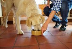 Recipes for canine pancreatitis diet