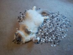 Max is bad at helping. cute cat