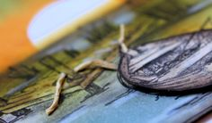 Rapport från ett skrivbord: Serendipity stamps challenge