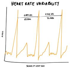 HRV: A Beginner's Guide to Heart Rate Variability (Part 1) | HITuni