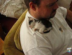 foto animali gatti 297