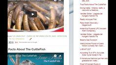 """10/02/17 09:22hs Boletín """"La Caracola"""" D.I.M. - Diario de Información del Mar Aprocean Blog http://aprocean.blogspot.com.es"""