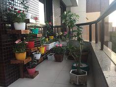 Minhas plantas, #vida #plantasnoap #rosadodeserto