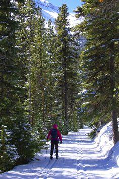 Skiing to Skogan Pass from Ribbon Creek in Kananaskis Country, Canada