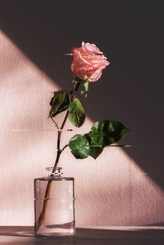 Valentine's Day rose bouquet photo by Jamie Street ( on Unsplash blumen Pink Flower Photos, Flower Images, Pink Flowers, Flowers Nature, Shadow Pictures, Rose Pictures, Aesthetic Vintage, Pink Aesthetic, Aesthetic Indie