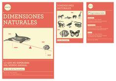 Programa Visual · Museo by Selva Aversa, via Behance