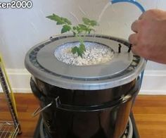 Growing Tomatoes Tips Single Dutch Bucket Hydroponic System - Easy DIY - Patio - Balcony - Winter Gardening Hydroponic Tomatoes, Hydroponic Farming, Tomato Farming, Hydroponic Growing, Hydroponics System, Hydroponic Solution, Aquaponics Garden, Growing Tomatoes Indoors, Growing Tomatoes In Containers