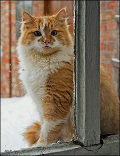Pretty cat in the window