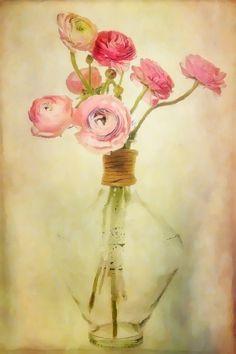 Ranunculus in a Vase by Ann Raine, via 500px