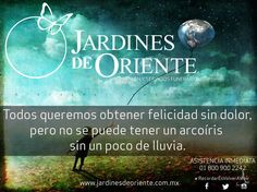 Jardines de Oriente (@jardinesdeote) | Twitter