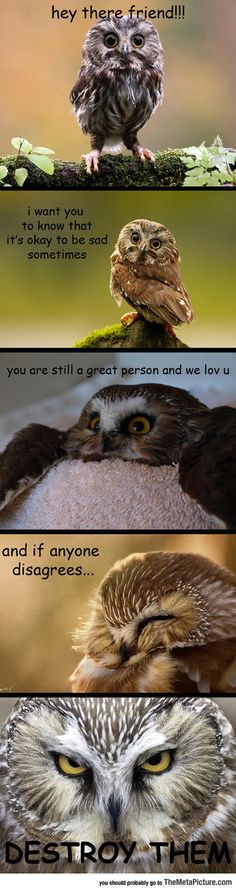 Some Innocent Advice From Your Friendly Owl