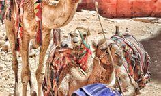 Un suggestivo viaggio tra le rovine di una città Eterna come Petra Antica dimora dei Nabatei. Cuore vivo della Giordania attuale.