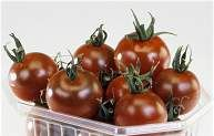 Nicky's Seeds UK supplier of a large range of quality seeds Cherry Fruit, Cherry Tomatoes, Tomato Seeds, Herb Seeds, Juicy Fruit, Unusual Plants, Garden Shop, Vegetable Salad, Flower Seeds