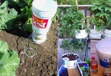 If You Have a Few Buckets You Can Use Them These 13 Ways In The Garden | Bucket Uses