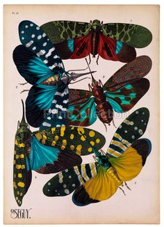 Insects, Plate 16
