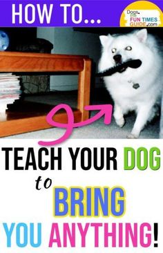 Here's how to teach your dog to bring something to you on command. For example, if I can't find the TV remote control, my dog will find it and gently bring it to me! Yep, my dog is great at bringing me the TV remote control. Any time I can't find it, he will go on a hunt and gently bring it to me! Here's how to teach your dog to bring something to you... on command.