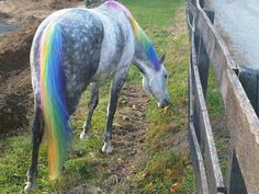 If my horse's hair wasn't black I would definitely do this and fulfill all my childhood dreams.