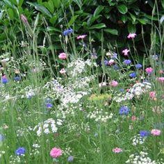 Prairie fleurie de 26 espèces d'annuelles et vivaces pour haie libre. Alternative à la tonte et aux herbicides. Pour 2 ans et +. Existe pour 7 ou 30 m².