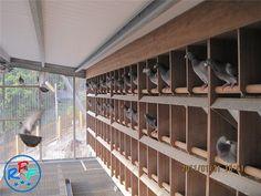 Pigeon loft design ideas and pigeon loft plan – Loft İdeas 2020 Backyard Solar Lights, Backyard Lighting, Outside Lighting Ideas, Racing Pigeon Lofts, Pigeon Loft Design, Indoor Christmas Lights, Pigeon House, Garden Pond Design, Homing Pigeons